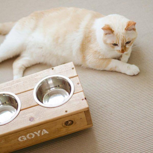 bebedero artesanal gatos