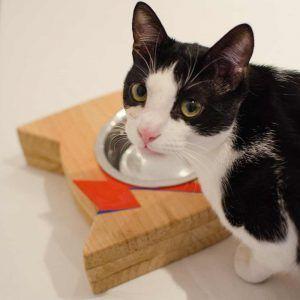 bebedero gatos bowie
