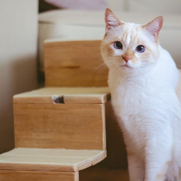 escalera madera gatos