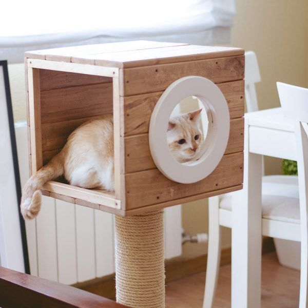 estructuras para gatos