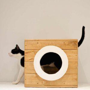 modulo madera gatos cierzo