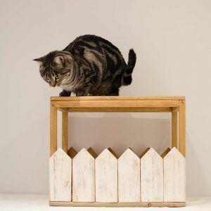 modulo parque gatos kira