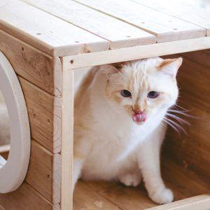 parque para gatos madera